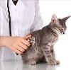 Ветеринарные клиники в Жиздре